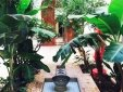 Jungle patio with fountain.