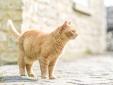 The Firs Bath hotel con encanto lujoso boutique con caracter pequeño