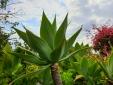 Casa Papagaio Funchal Madeira