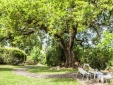 the big love oak ! this oak is 600 year old and it's incredible !