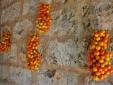 Masseria Uccio - Tomatoes