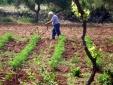Masseria Uccio - Garden