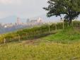 Locanda Palazzone Orvieto  Garden