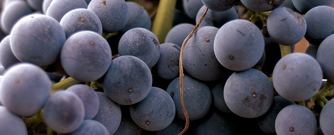 Tierras de vino